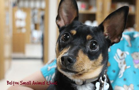 Pet Diagnostics in Belton, TX