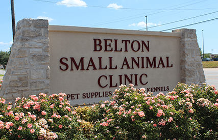 Animal Hospital in Belton
