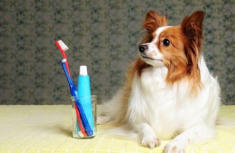 Pet Dental Care in Belton