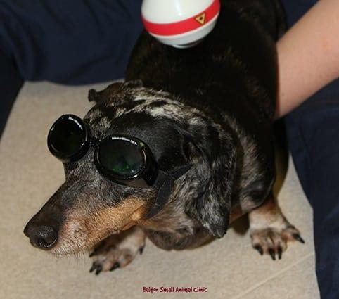 Pet Laser Therapy in Belton, TX