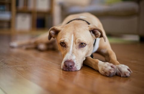 Cat and Dog Euthanasia in Belton, TX