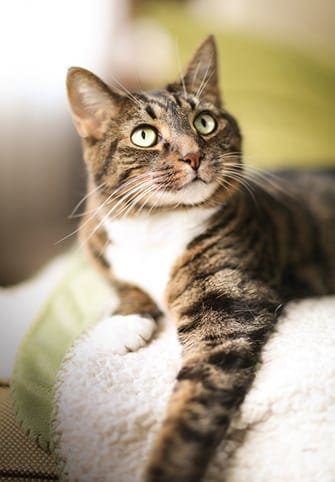 Memorializing your cat after euthanasia